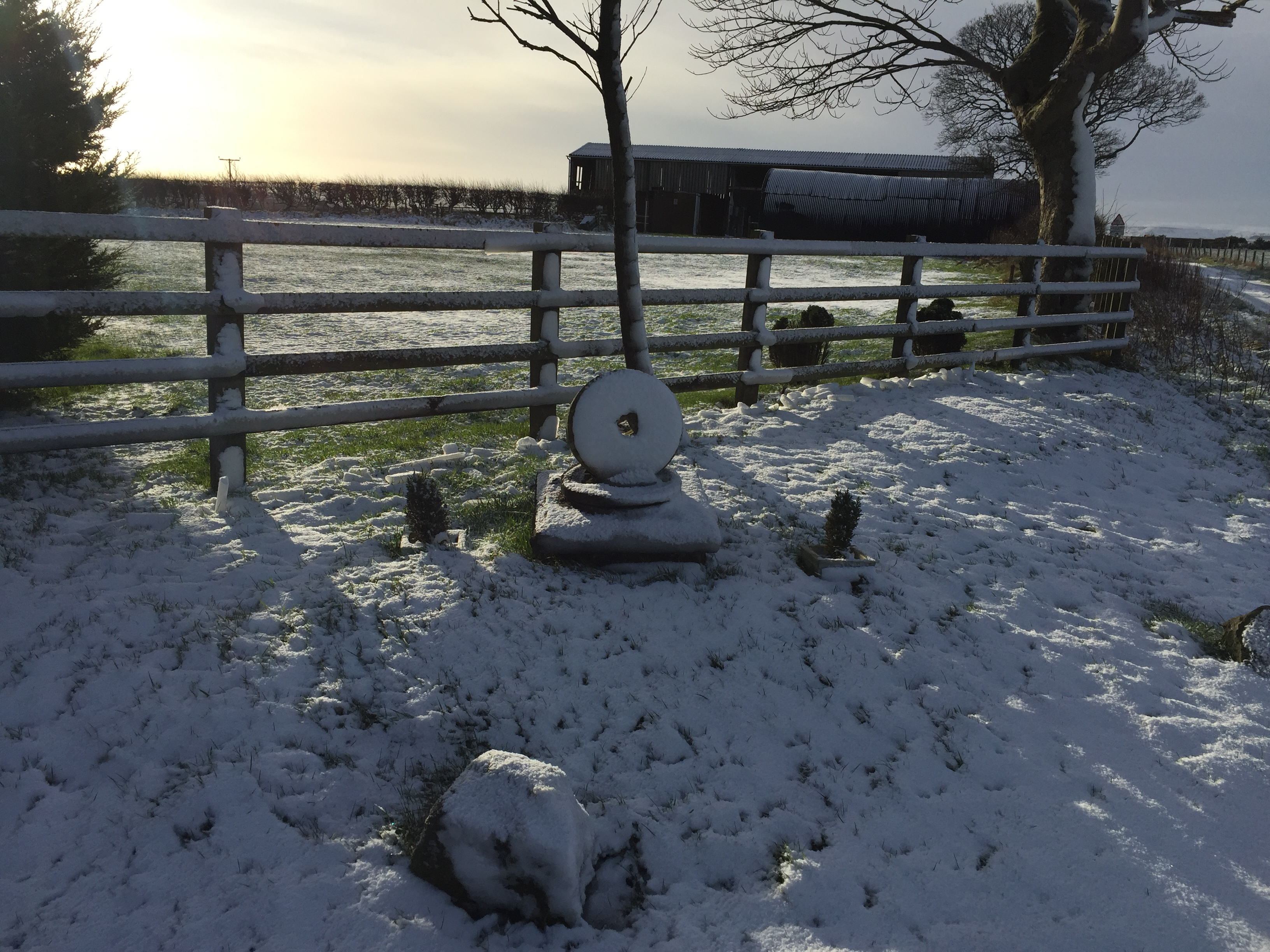 Merry Xmas from Folly Hall Farm